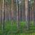Wychowanie drzewostanów z nasion
