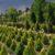 Przesadzanie roślin dla utworzenia drzewostanu