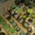 Wysadzanie roślin z grzędy